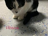 My story Hibiscus and her siblings were found