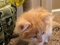 Hiedi's story Im a very affectionate kitten. I love to