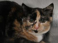 Hilda's story Hilda is a sweet, outgoing kitty looking