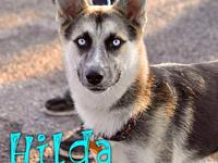 Hilda's story Hilda is a stunning, 1 year old, female,