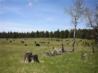 Moon Acreage - Pennington County, South Dakota 90 acres