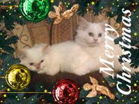Hello! We are two playful brothers and are located in