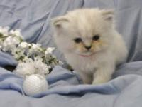 Date of birth 5-16-2012 kitten pink ball----female