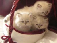 3 little kittens trying to find a new loving house for