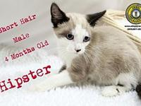 Hipster's story You can fill out an adoption