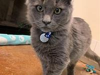 My story Hello, my name is Hobart! I was a stray in