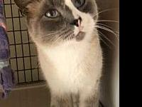 Hobbs's story PAW Animal Shelter is a high intake No