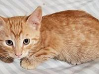 My story Cute little boy kitten looking for a forever