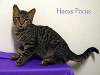 Hocus Pocus's story PAW Animal Shelter is a high intake