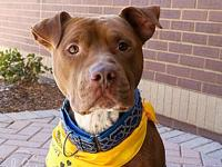 Holden's story Please meet Holden! He is a 2-3 year old