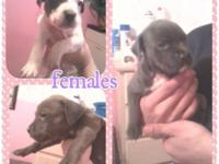 Going fast !!! 6 WEEKS OLD ... VERY SOCIALIZED AND