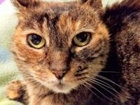 Holly, a declawed 1-year-old cat, was found, abandoned.