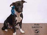 Holly-BIO (In a Foster Home)'s story Meet Holly! A year