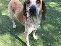 Holly's story Holly here! I am a 5.5 year old Hound