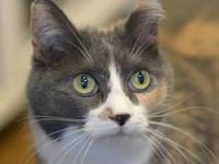 Holly's story Hi, I'm Holly. I am a sweet dilute tortie