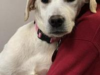 Holly's story For Adoption: Holly is approx. 4.5 months