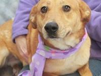 Holly-PENDING's story To be considered for adopting a