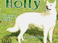 Holly's story You can fill out an adoption application