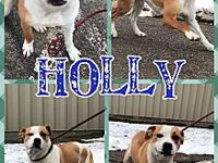 Holly's story Coming to us as a stray, Holly is just