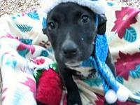 My story My name is Holly and Im a sweet lab mix. Im