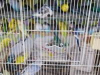 I have many birds to rehome Parakeets(young,not tame