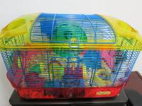 Home Sweet Home triple loft hamster cage,includes built