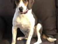 Homer's story For Adoption: Homer is a 1 year old