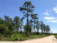 Timber investors! Hunters! Farmers! Take a look - FIRST