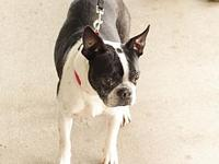 Honey's story Honey is a 10 year old sweet girl and