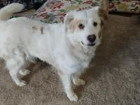 Honey is a 5-6 year old Collie mix.  She's got a lot of