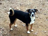 Honeydew is one of 5 dogs that CCR rescued from a