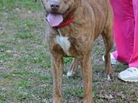 Honey (Fostered in TN)'s story Angels Among Us Animal