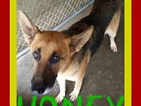 HONEY's story Please contact Jenny Cope