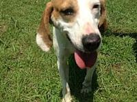 Honey's story Honey is one of our 2 little hound girls