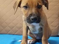 Honey's story DATE THIS PUP WILL BE GOING TO 1ST EVENT: