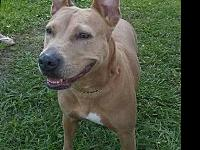 Honey's story Honey was found about a month ago on the