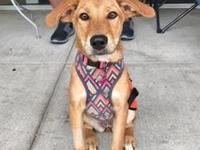 Honey's story Honey is a 19lb Retriever/Hound mix and