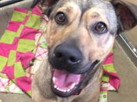 Honey is a super sweet young shepherd mix. Adoption