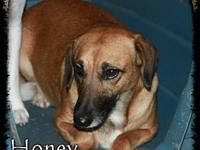 Honey's story Honey is approx 4 years old. She is