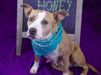 HONEY's story Honey is appropriately named, she might