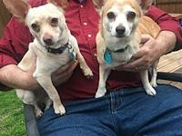 Honey and Josie's story These dogs are being fostered