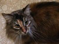 "Honey Baby's story Honey Baby is a lovely, ""torbie"""