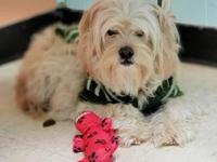 My story Honey is a 2 year old Maltese mix looking for