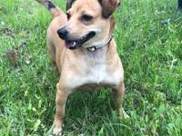 Honey is a one year old female Terrier mix who weighs