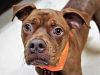 HOOCH's story HSPC's adoption fee is $100 with an