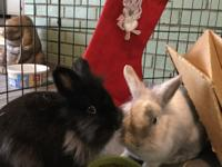 Hope and Patience are a lovely pair of lionhead sisters