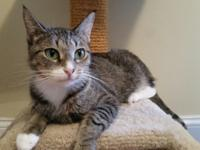 Hope is a beautiful stripped tabby that was born around