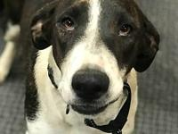Hope's story Hope is a 7 month old female hound mix we