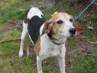 Hope is a lovely, gentle Walker hound mix, who is 7 yr