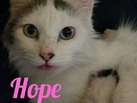 Hope's story Sweet, beautiful Hope and her adorable